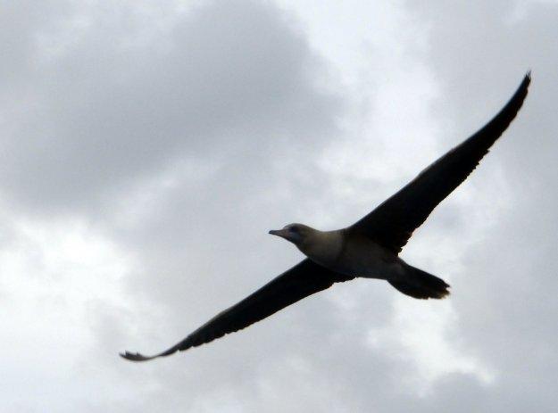 Unknown bird?