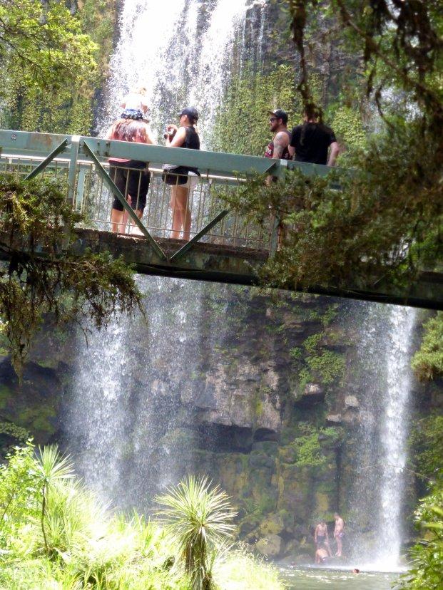 Whangarei Falls - popular spot