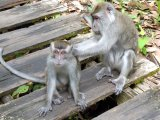 ...monkeys, hilly walks and lush rainforests...
